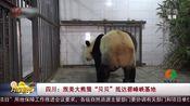 """[共度晨光]四川:旅美大熊猫""""贝贝""""抵达碧峰峡基地"""