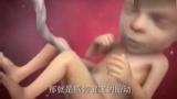 胎儿发育过程:15~20周(视频)!准妈妈必看!