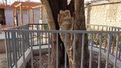 农村500多年树龄的老槐树,曾有人出天价购买,给多少钱都不敢卖