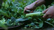 李子柒把小院里的蔬菜拔了个遍,样样洗净切碎,制作火锅的底料