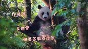 熊猫北川: 小笼包灌汤包, 你听说过川包吗?