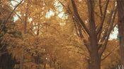 地坛公园赏银杏