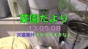 菜園だより130508天恵緑汁ほかタネまきなど(酵素/天惠绿汁/酶)