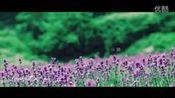 无锡雪浪山薰衣草紫色花海 www.xuelangshan.com—我的点播单—在线播放—优酷网,视频高清在线观看