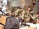 ■日本の名曲2009(39)■arashi【season】