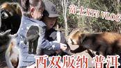 云南版纳普洱 野象谷 小熊猫庄园 VLOG 富士XT3