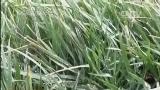 [交易时间]新疆克拉玛依:十级大风来袭 中小学全面停课