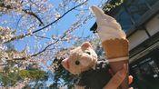 2019年4月Arashi演唱会 从名古屋到东京 高山祭 没有雪的白川乡 跟着樱井翔打卡金泽 木更津闲逛