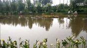 爱剪辑-德州禹城徒骇河国家级湿地公园—在线播放—优酷网,视频高清在线观看