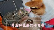 【狗酱】荷马和莱恩の小日常之肥猫是如何练成的