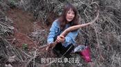 """在山里摘蒿子菜意外发现棵""""野生葛根"""",正有点饿了真想直接啃。"""