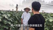农村小伙 葡萄园采摘 带你看下 山东省菏泽市 果农的热情