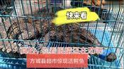 河南南阳:方城县一家超市竟然售卖鳄鱼肉?网友:我可不敢吃