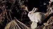 幼鸟出生的时间要跟他们猎物出生的时间一致?