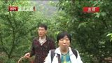 [特别关注-北京]北京:樱桃全面上市 过量食用或致腹泻上火