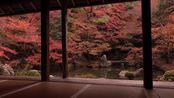 114. [4K] 蓮華寺 京都の紅葉 と着物美人 京都の庭園 Renge-ji Temple Autumn leaves [4K] The Garden of