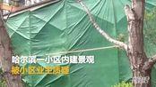 【黑龙江】哈尔滨市一小区内建景观被业主质疑 执法部门将该建筑围挡拆除