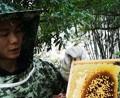 村夫养蜜蜂vlog,检查蜂王春繁产卵情况怎么样?仔脾都产满仔了