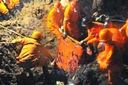 Death toll in Yunnan landslide rises to 44
