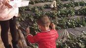 cy天宠一生15.11月末32个月和姐姐摘草莓—在线播放—优酷网,视频高清在线观看