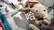 【救助流浪猫大福8】讲讲换药包扎注意事项!大福就快好啦!艾伦也不吐了吃了点罐头