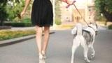 遛狗把路人吓摔倒被判赔9万 路人被鉴定为十级伤残