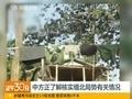 外交部:中国公民因非法伐木被缅方抓扣