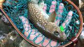 日本溪流鳟鱼钓行-トラウトラボふじむら ミニスパイカー