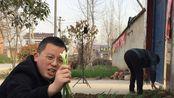 帮大娘家栽葱,却被我当早餐吃,一口吃五棵,真过瘾