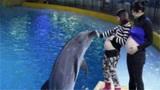 """孕妇去海洋馆,被海豚""""吻""""了肚子,医生:恭喜你做了天然B超"""