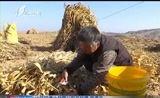 [山西新闻联播]打赢脱贫攻坚战:吕梁——特色杂粮产业将成为农民脱贫增收的大产业