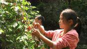 四川达州万源:五一假期的最后1天,小编这里的野樱桃你见过吗?