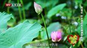 [北京您早]我爱北京 西城区 积水潭桥西北侧潭西胜境