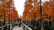 上海青浦区青西郊公园,水上森林宛如世外桃源