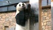 【大熊猫文惠】小冰豆儿一回内场就穿上了白色百褶裙,淘气得很