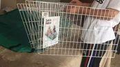 【Cage Unbox】油管宠物达人开箱美国亚马逊最火豚鼠笼