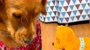 超萌的狗狗:为什么我的孩子长这样?想做亲子鉴定怎么办