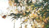 杭州湖畔大学的晚秋(SONY索尼 a7m3/16-35mm f4/DJI大疆 ronin SC 如影 SC)