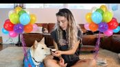 【Kristen McAtee】My Dog's 2nd Birthday