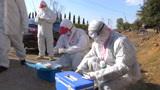 免疫接种严格消毒!湖北咸宁紧急调拨165万毫升禽流感疫苗做防控
