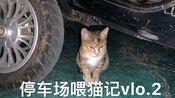 【萌宠】停车场喂猫记vlo.2