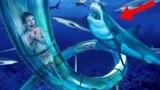 熊孩子体验最刺激的鲨鱼水梯,与鲨鱼近距离接触,看着太震撼了!