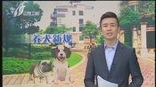 [新闻午报-山西]太原市新版养犬管理条例出台