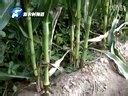 【乡村科技】376期 南阳市农民合作社牵出农业生产正方向