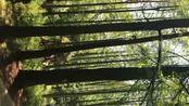 波尔登森林公园
