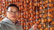 收拾好库房去曹村看千年柿树,红彤彤的柿子等你来摘