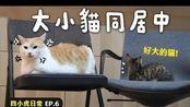 【黄阿玛的日常】大小猫同居中!四小虎日常EP.6