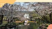 2020杭州 最美樱花季 最佳赏樱线路 太子湾公园 花港观鱼 浴鹄湾(太子湾公园实行网上预约制)