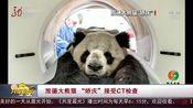 """[共度晨光]旅德大熊猫""""娇庆""""接受CT检查"""