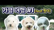 夏日假期加平旅行#1(feat.好/vacation with dog